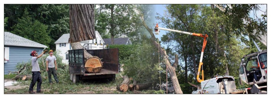 Tree removal by our tree services in Bracebridge