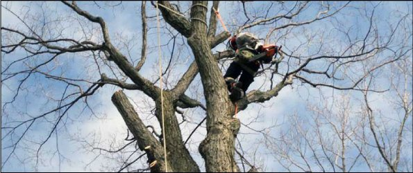 worker in tree using chainsaw